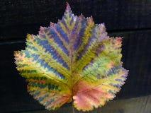 Herbstszene: schönes buntes Blatt Stockbilder