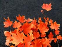 Herbsttönungen Stockbild