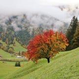 Herbsttag in den Schweizer Alpen Stockfotos