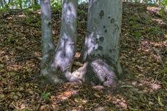 Herbsttag in einem Wald Lizenzfreie Stockbilder