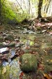 Herbsttag im Holz mit einem Strom Lizenzfreies Stockfoto