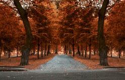 Herbsttag im Park Stockfotos