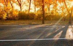 Herbsttag mit Bäumen und gelbem Laub stockbild