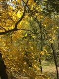 Herbsttage in einem wilden Platz Stockbilder
