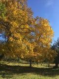 Herbsttage in einem wilden Platz Lizenzfreie Stockbilder