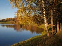 Herbstteich mit Birke Stockbild