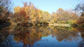 Herbstteichstille-Hintergrundansicht stock footage