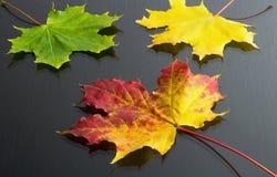 Herbstthema: Ahornblätter der rot-gelben Farbe im Hintergrund mit Gelb- und Grünblättern Stockbild