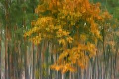Herbstthema auf der Oberfläche des Wassers lizenzfreie stockbilder