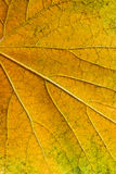 Herbsttraubenblatt als Hintergrund Lizenzfreie Stockfotografie