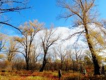 Herbsttraum Stockfotos