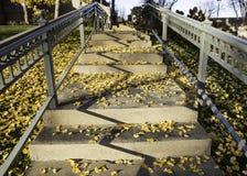 Herbsttreppe Lizenzfreie Stockbilder