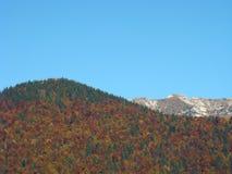 Herbsttrio - Bäume, Berge, Himmel Stockfotografie