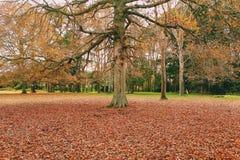 Herbsttropfen Lizenzfreies Stockbild