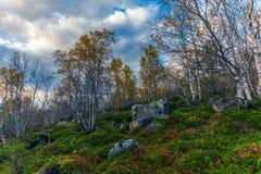 Herbsttundra Lizenzfreie Stockfotos