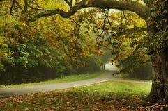 Herbsttyp Landschaft Lizenzfreies Stockfoto