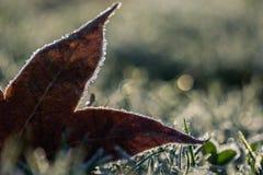 Herbsturlaub bereift auf dem gefrorenen Gras Stockfotos