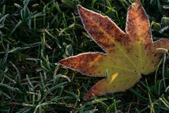Herbsturlaub bereift auf dem gefrorenen Gras Stockfoto