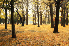 Herbsturlaub in Japan Stockbild