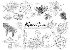 Herbstvektorsatz mit Blättern, Beeren, Tannenzapfen, Pilze d lizenzfreie abbildung