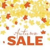 Herbstverkaufsplakat, Fahne, Logo, druckend für Saisonpromo, Rabatt, Sonderangebot Hand gezeichnet, Herbst mit hellem Florida bes vektor abbildung