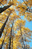 Herbstwälder lizenzfreies stockbild