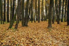 Herbstwald. Lizenzfreie Stockbilder