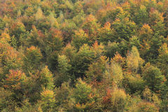 Herbstwald Stockfoto