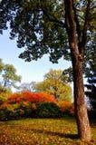 Herbstwald Lizenzfreies Stockbild