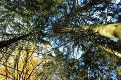 Herbstwald! lizenzfreie stockbilder