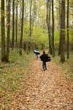Herbstwald Stockfotos