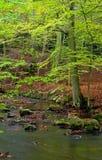 Herbstwald lizenzfreie stockfotografie