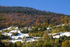Herbstwald Stockfotografie