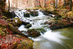 Herbstwald. Lizenzfreies Stockfoto