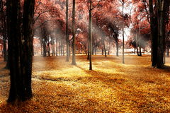 Herbstwald. Stockfoto