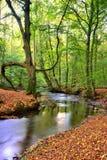 Herbstwald Stockfoto