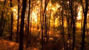 Herbstwald. Lizenzfreies Stockbild
