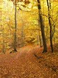 Herbstwald Lizenzfreie Stockfotos