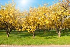 Herbstwald Lizenzfreie Stockbilder