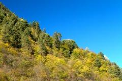 Herbstwald auf dem Abhang Stockfotografie