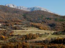 Herbstwald auf dem Hintergrund von Felsen Lizenzfreies Stockfoto