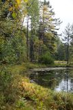 Herbstwald auf dem See lizenzfreie stockfotografie