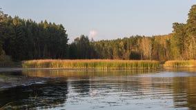 Herbstwald auf dem See Stockbild