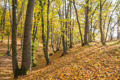 Herbstwald bei Sonnenuntergang Stockfotografie