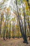 Herbstwald bei Sonnenuntergang Lizenzfreie Stockfotos