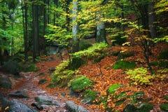Herbstwald in den Bergen Stockbild