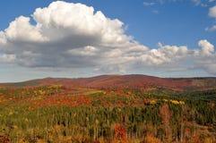 Herbstwald in den Bergen lizenzfreie stockbilder