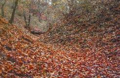 Herbstwald in den Bergen mit den Gelben und Rotblättern Lizenzfreie Stockfotografie