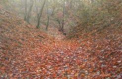 Herbstwald in den Bergen mit den Gelben und Rotblättern Stockfoto