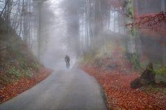 Herbstwald eingehüllt durch kalten Nebel Stockfotos